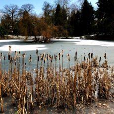 Wintergärten mit Stauden